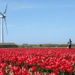 Windmolenaar Cor de Graaf wordt voorzitter Windunie