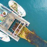 Belgisch offshore windpark wordt testveld voor zeewierteelt