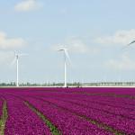 Zeewolde geeft groen licht voor regioplan windenergie Zuid-Oost Flevoland