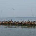 Commissie M.E.R. vindt aanpak milieu-effect windenergie helder